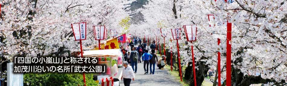 桜が満開の武丈公園の画像